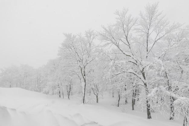 Boom bedekt met sneeuw op de winter storm dag in bos bergen
