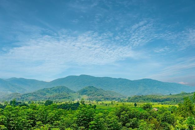 Boom-, berg- en blauw luchtlandschap voor zomerachtergrond of banner