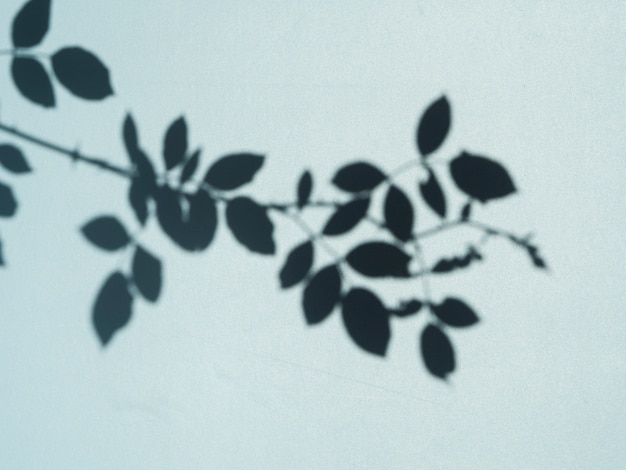 Boom blad schaduw op een lichtblauwe achtergrond