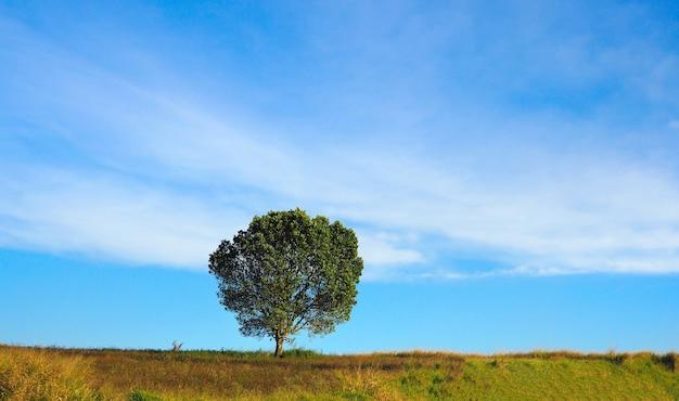 Boom die uitgestrekte eenzaam op blauwe hemelachtergrond met groen gras groeit