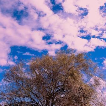 Boom en paarse lucht. minimal art ontwerp. tropisch surrealistisch