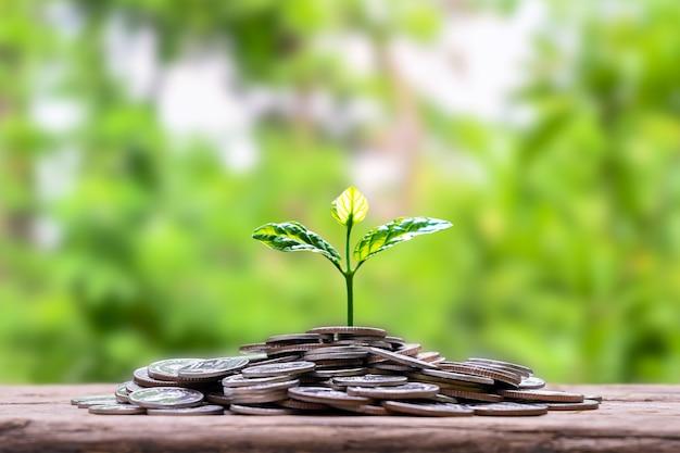 Boom groeit op een stapel munten en groene achtergrond het concept van de ontwikkeling van het financiële systeem en economische groei.
