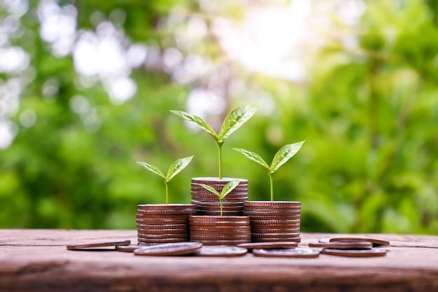 Boom groeit op een stapel zilveren munten en wazig groene achtergrond. geldgroei en zakelijk succesconcept