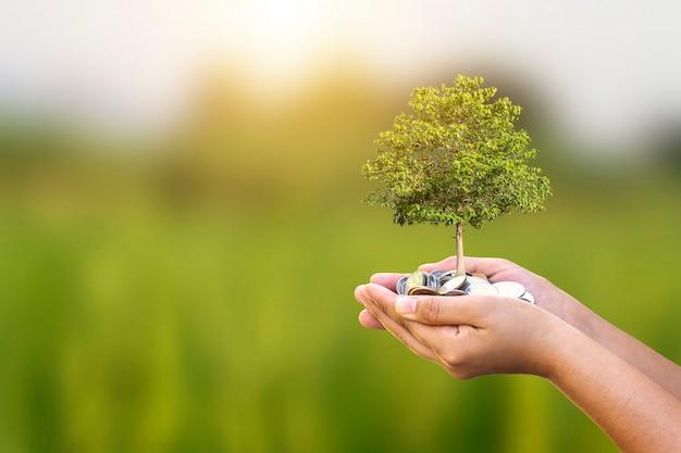 Boom groeit op munt in menselijke hand, plantengroei concept. en investeringen die milieuvriendelijk zijn
