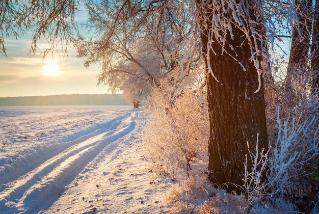 Boom in de winterweg. frosty zonsopgang over de velden.