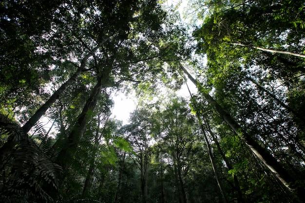 Boom in het bos op berg select focus donker of bij weinig licht