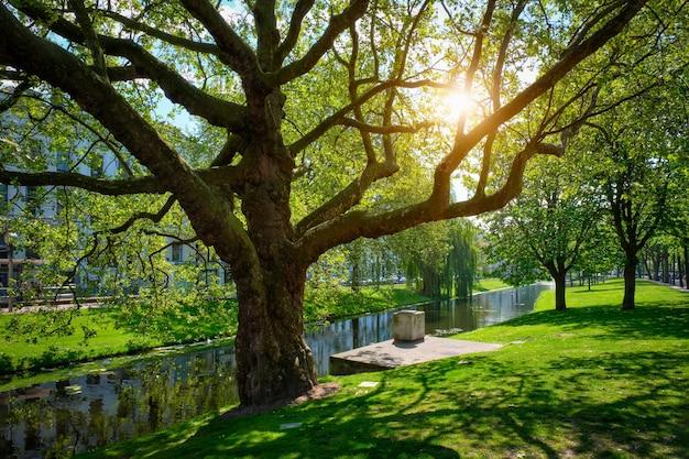 Boom in openbaar park in rotterdam