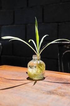 Boom in pot decoratie op de tafel
