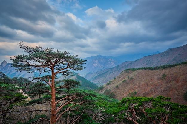 Boom in seoraksan national park, zuid-korea
