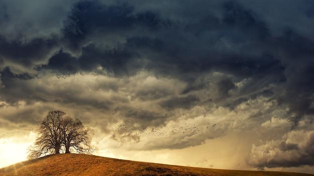 Boom in woestijn onder witte wolken overdag