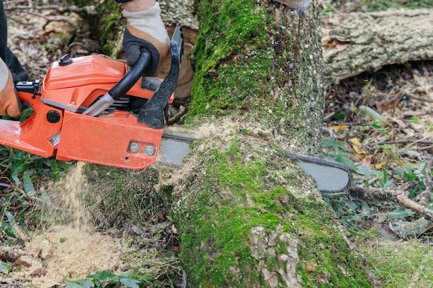 Boom kappen met een grote kettingzaag die in een boomstam snijdt bewegingsonscherpte van zaagsel en steenslag een ontwortelde gebroken boom, verscheurd door de wind tijdens een hevige storm