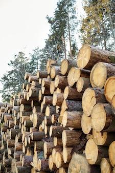 Boom kappen. ontbossing. logging ñ eenbloemige bomen. gestapelde logboeken in het bos. timmerhout