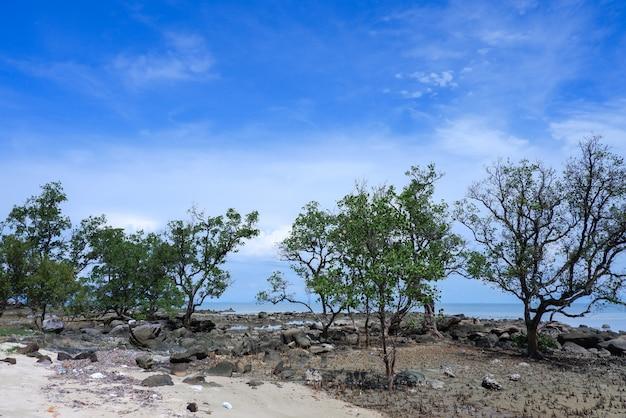 Boom langs het strand met blauwe lucht in thailand.