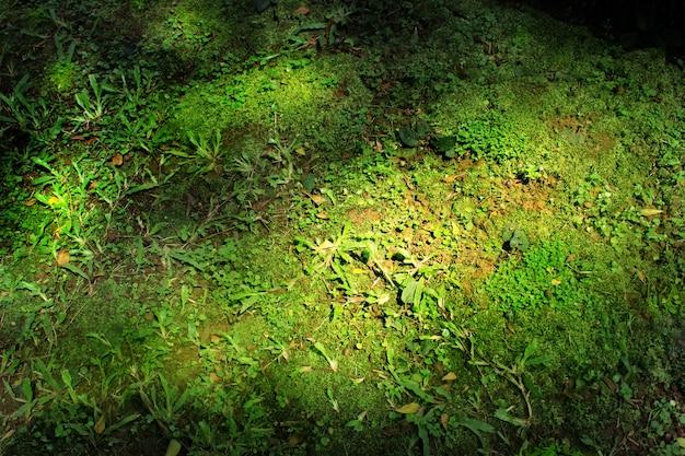 Boom met mos