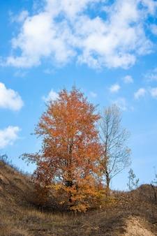Boom met rode bladeren op blauwe hemel met wolken in de herfst