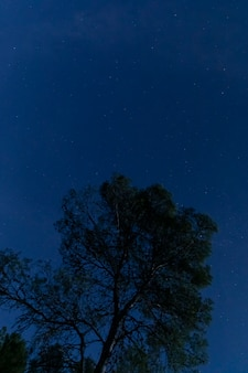 Boom met sterrenhemel