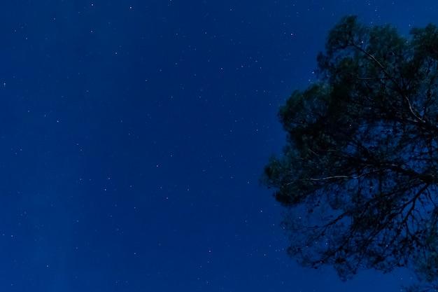 Boom met sterrige nachtachtergrond