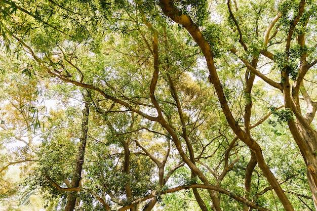 Boom met takken en bladeren tegen de hemel