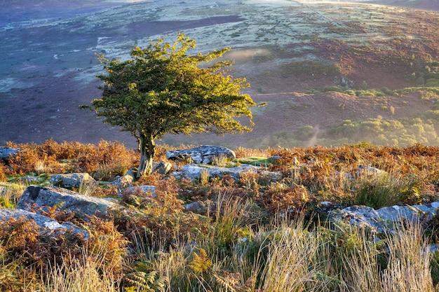 Boom omgeven door groen onder het zonlicht in het dartmoor national park, devon, het vk
