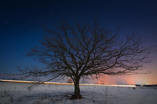 Boom op een achtergrond van de nachtelijke sterrenhemel in de winter.