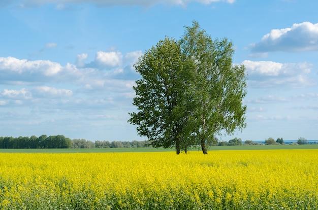 Boom op een geel veld boven de hemel met wolken