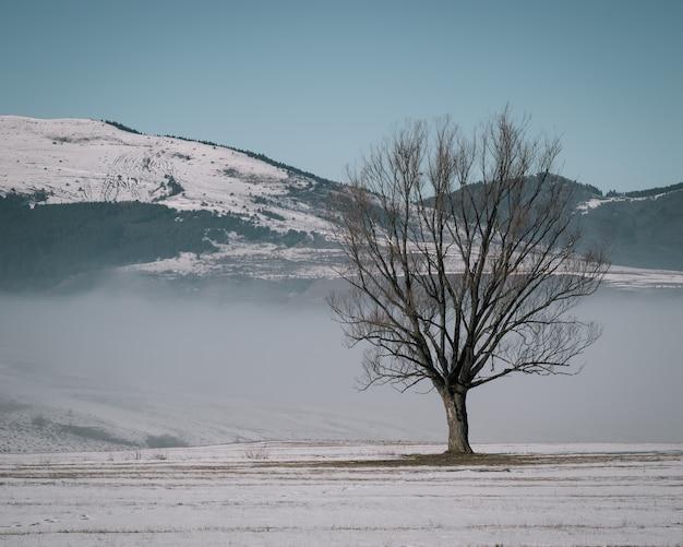 Boom op een veld en een berg in de verte bedekt met sneeuw