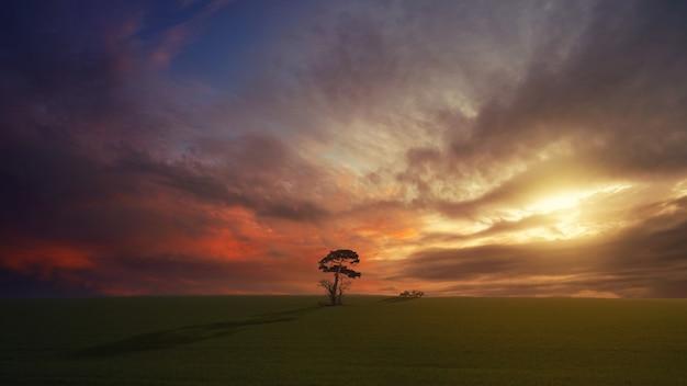 Boom op groen veld tijdens gouden uur