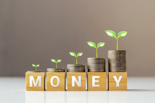 Boom op munten en houten kubussen met woorden geld, financiën en zakelijke ideeën.