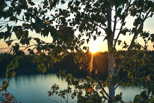 Boom tegen de zonsondergang, de ondergaande zon door de bomen, zonsondergang