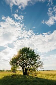 Boom van de eik met zon blauwe hemel met wolken