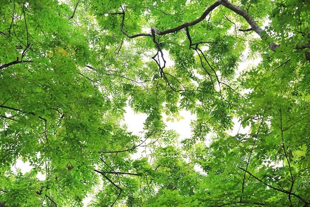 Boomblad en takken in de tuin tegen hemelachtergrond.
