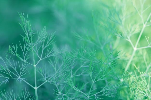 Boombladeren bokeh voor aardachtergrond en sparen groene concept, abstracte, zachte en onduidelijk beeldnadruk