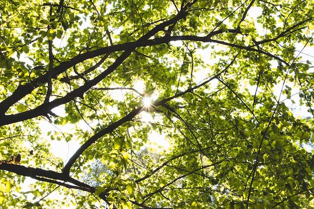 Boombladeren in zonnige dag