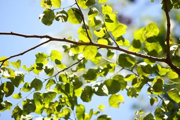 Boombladeren op de hemelachtergrond