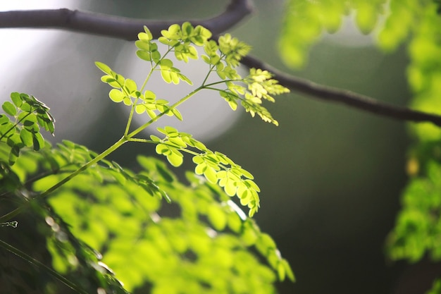 Boombladeren op een groene achtergrond