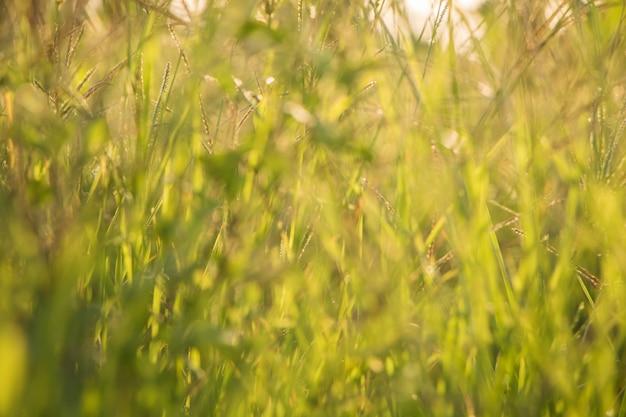 Boombladeren voor aardachtergrond