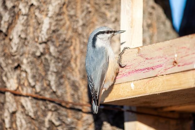 Boomklever bij vogelvoeder in de winter