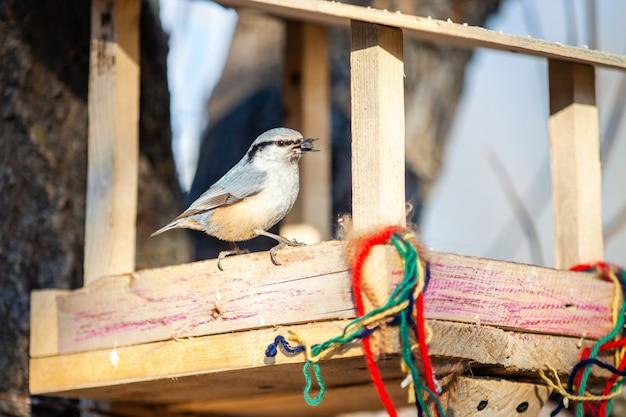 Boomklever in houten vogelvoeder met zonnebloemzaad in zijn snavel