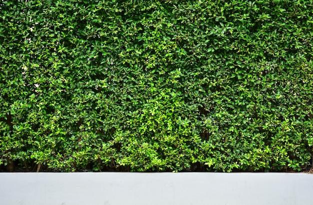 Boommuur naast de weg. verticale tuinmuur