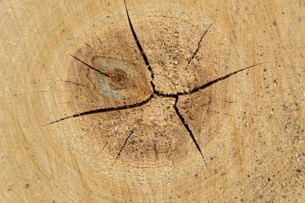 Boomring log hout. natuurlijke organische textuur met gebarsten en ruw oppervlak. close-up macro weergave van einde gesneden hout boom sectie met scheuren. houten oppervlak met jaarringen.