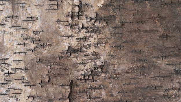 Boomschors foto met zichtbare textuur, natuur houten schors achtergrondafbeeldingen, bovenaanzicht macro houtstructuur voor achtergrond of ontwerp