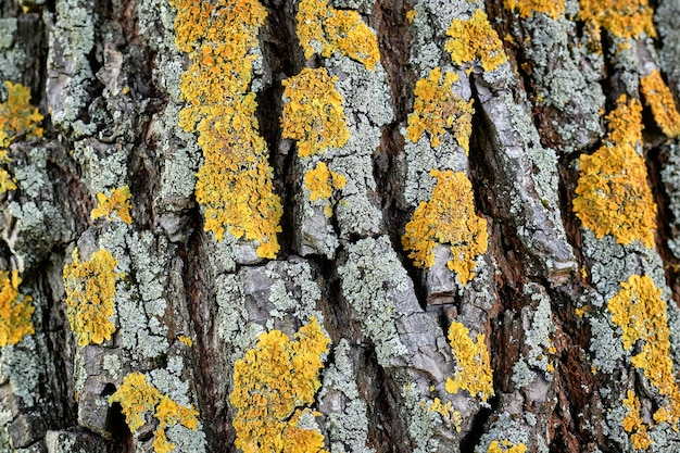 Boomschors met geel mos, houtstructuur, natuur achtergrond.