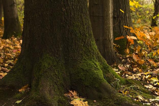 Boomschors met groen mos in het bos. close-up shot