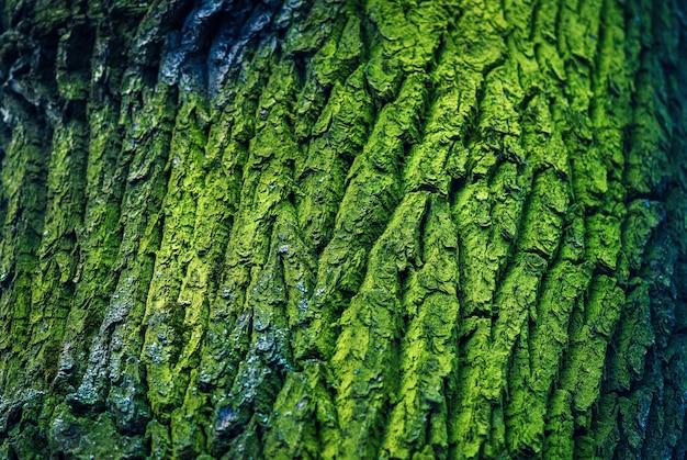 Boomschors textuur gegroeid met groen mos