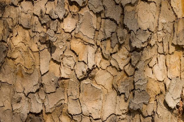 Boomschors textuur met natuurlijke patronen voor achtergrond