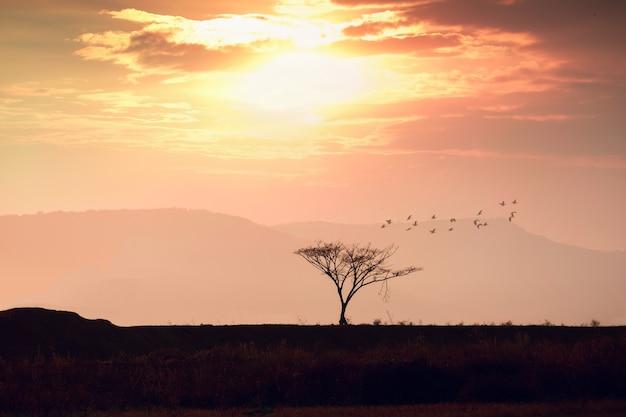 Boomsilhouet met oranje zonsonderganghemel