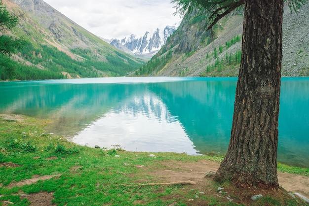 Boomstam op oever van turkoois bergmeer tegen besneeuwde rotsen
