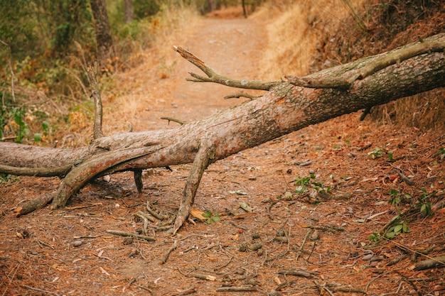 Boomstam op pad in de natuur