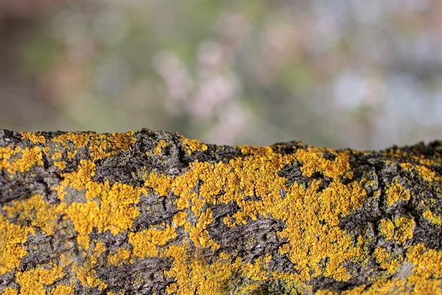 Boomstam textuur achtergrond in de natuur