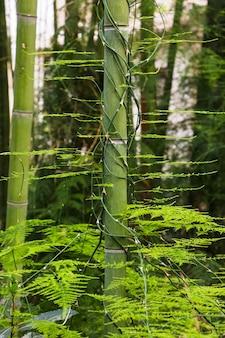 Boomstam van bamboe in de jungle